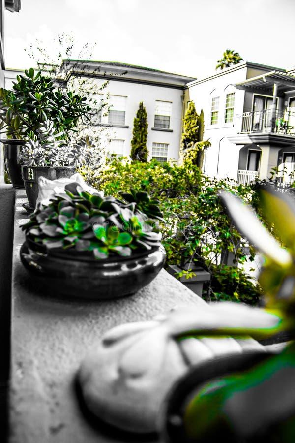 grön livstid royaltyfri bild