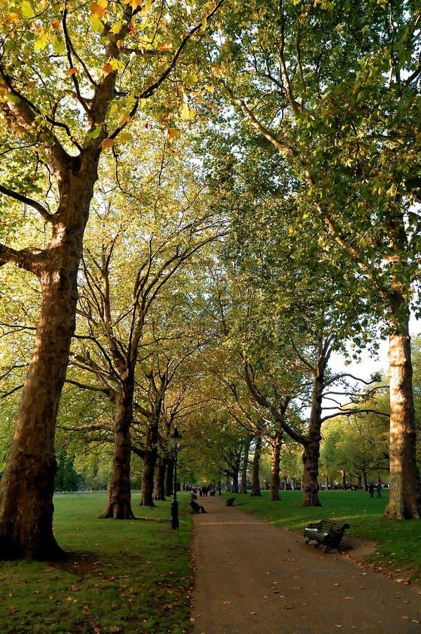 grön london park fotografering för bildbyråer
