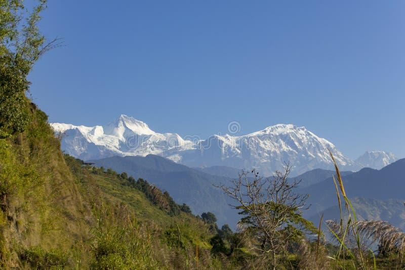 Grön lutning av en kulle mot bakgrunden av ett snöig berg av Annapurna under en klar blå himmel royaltyfria bilder