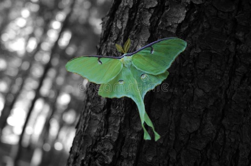 Download Grön mal arkivfoto. Bild av green, fluga, tree, fjäril - 993528