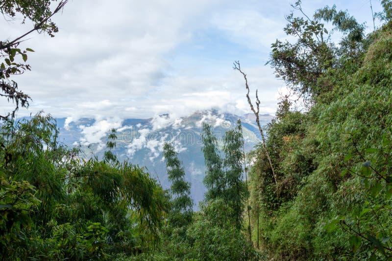 Grön markis för bambu i hög-höjd djungler på peruanen Anderna med moln-täckte berg, Peru arkivbilder