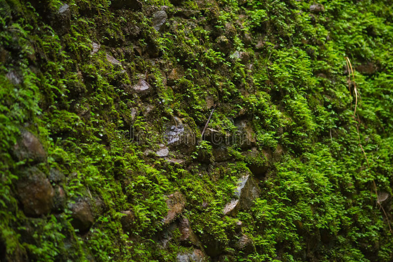 grön moss royaltyfri bild