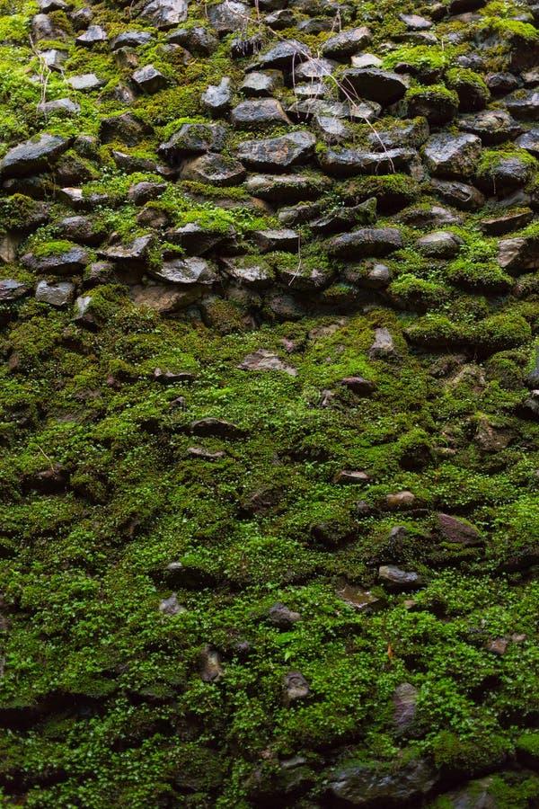 grön moss royaltyfri fotografi
