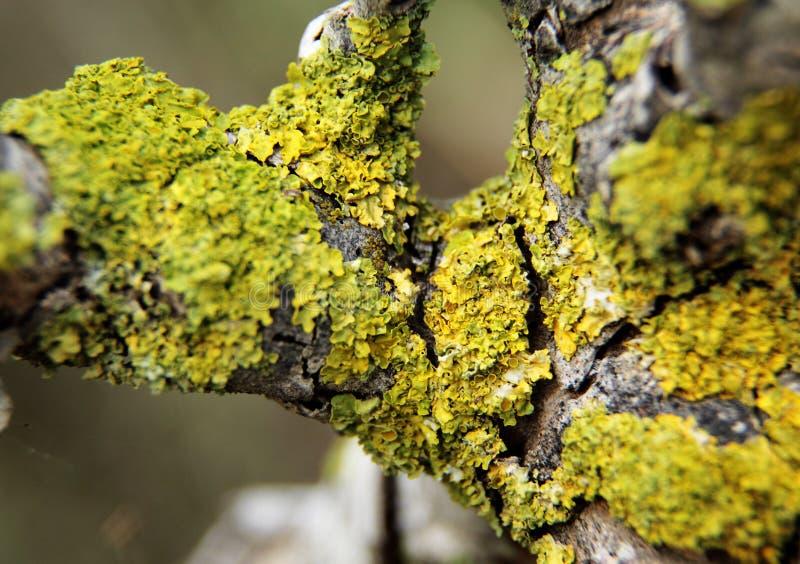 Grön Moss på treen arkivbilder