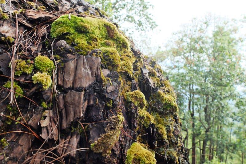 Grön Moss på treen royaltyfri fotografi