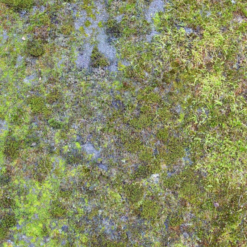 Grön mossa arkivbilder