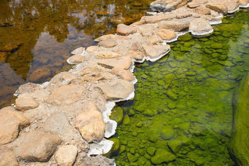 Grön mossa eller alger i Hot Springs royaltyfria foton