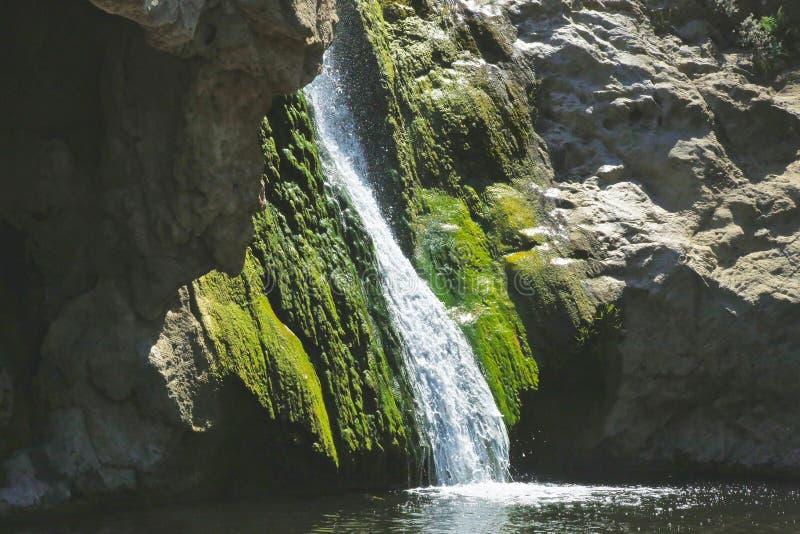 Grön mossa för vattenfall royaltyfri bild