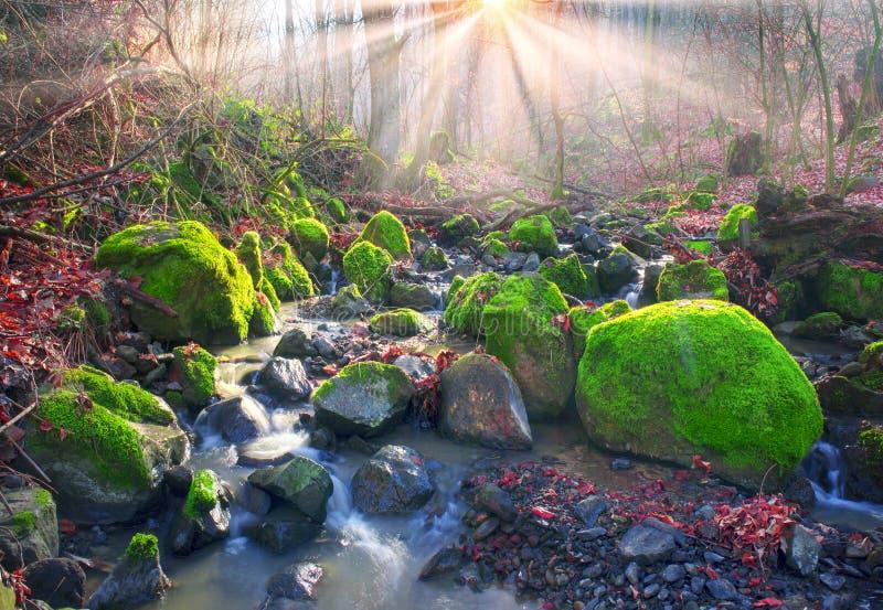 Grön mossa i liten vik royaltyfri foto