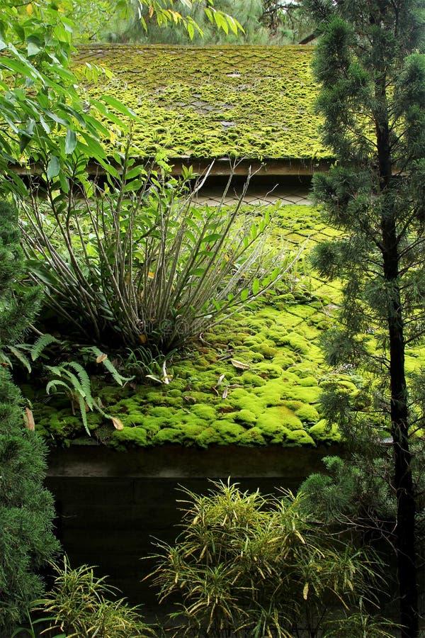 Grön mossa och växten täckas på taket arkivfoton