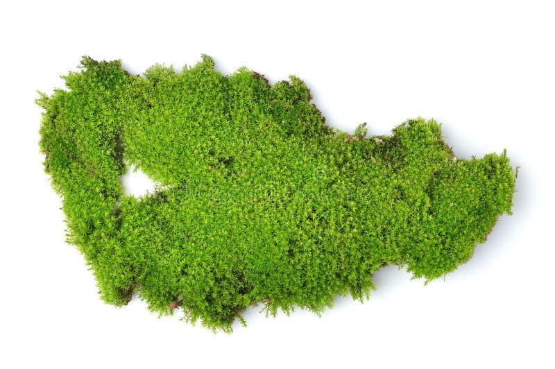 Grön mossa på vit bakground arkivfoto