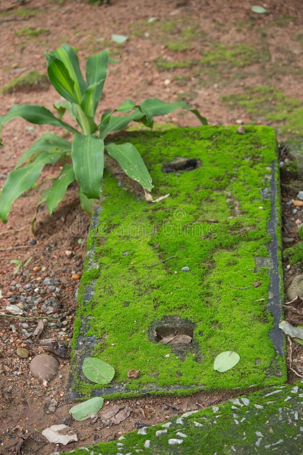 Grön mossa som växer på ett tegelstenfundament fotografering för bildbyråer