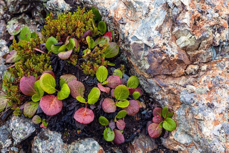 Grön mossa vaggar på tätt upp royaltyfri fotografi