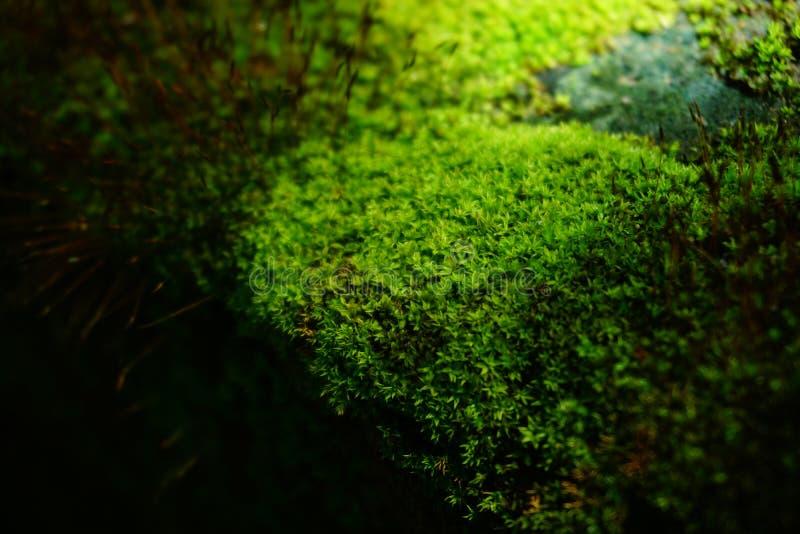 Grön mossabackgroumd arkivfoton