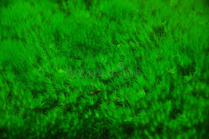 Grön mossabakgrund fotografering för bildbyråer