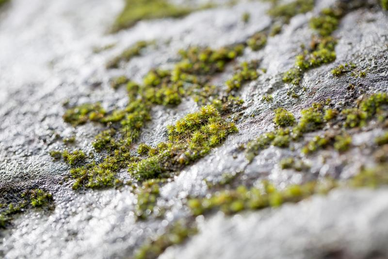 grön mossrock royaltyfri foto