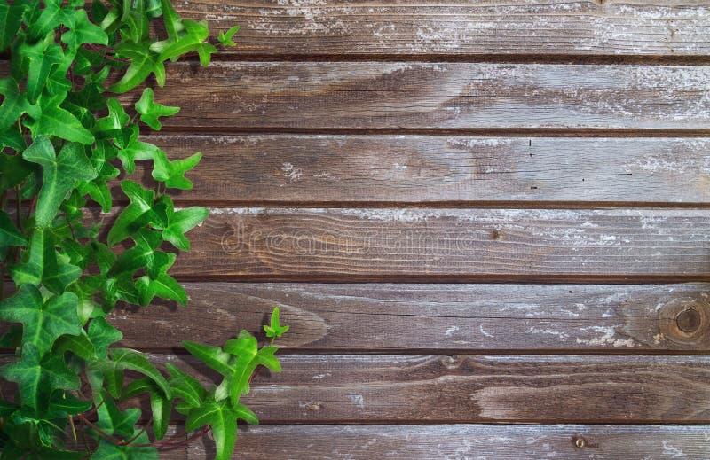 Grön murgröna på träbakgrund royaltyfri fotografi