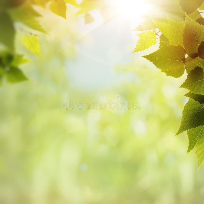 Grön natur royaltyfria foton