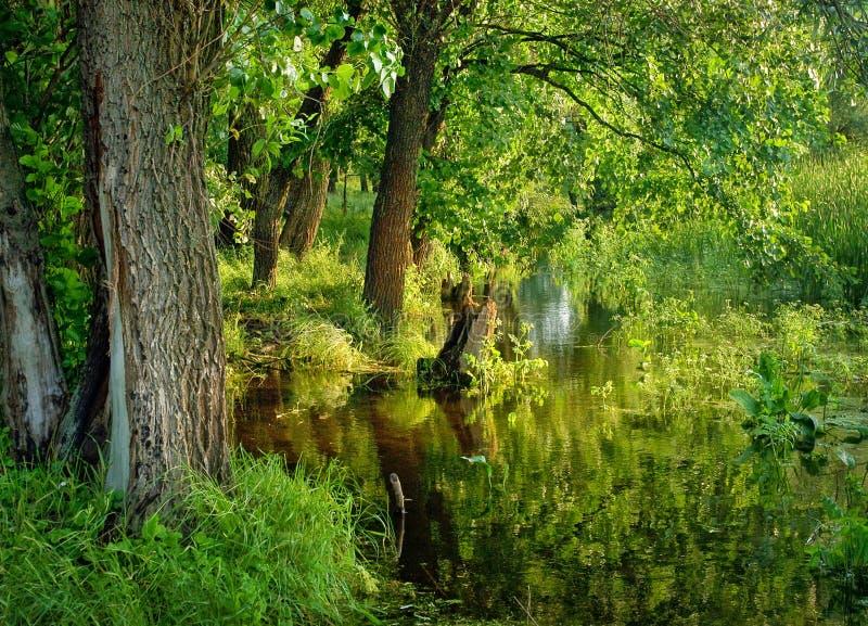 grön natur för skog royaltyfri fotografi