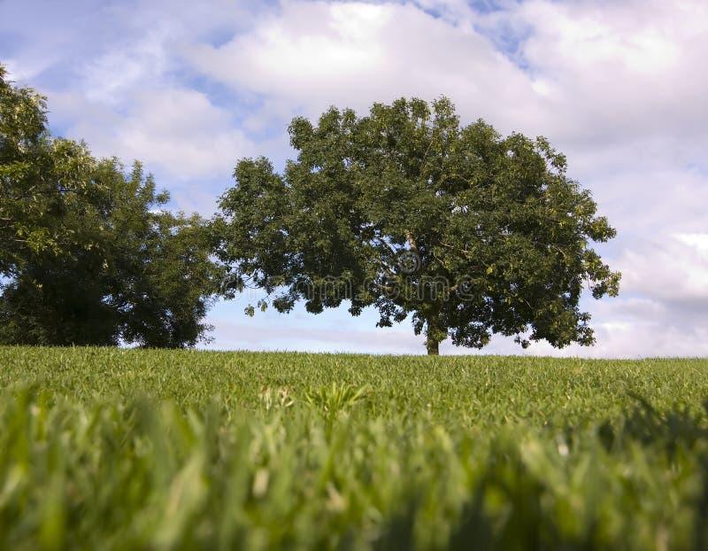 grön naturlig öppet utrymme arkivfoto
