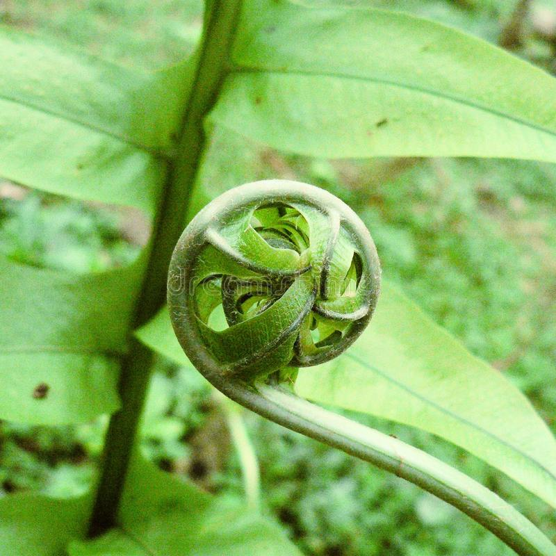 Grön naturlig lif royaltyfri bild