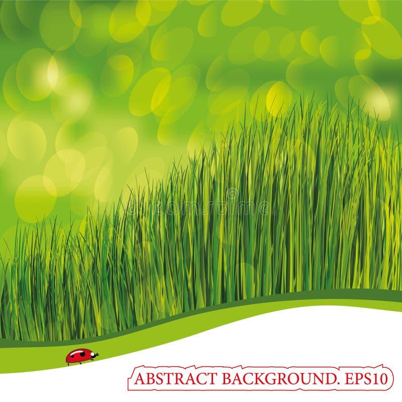 grön nyckelpiganatur för bakgrund vektor illustrationer