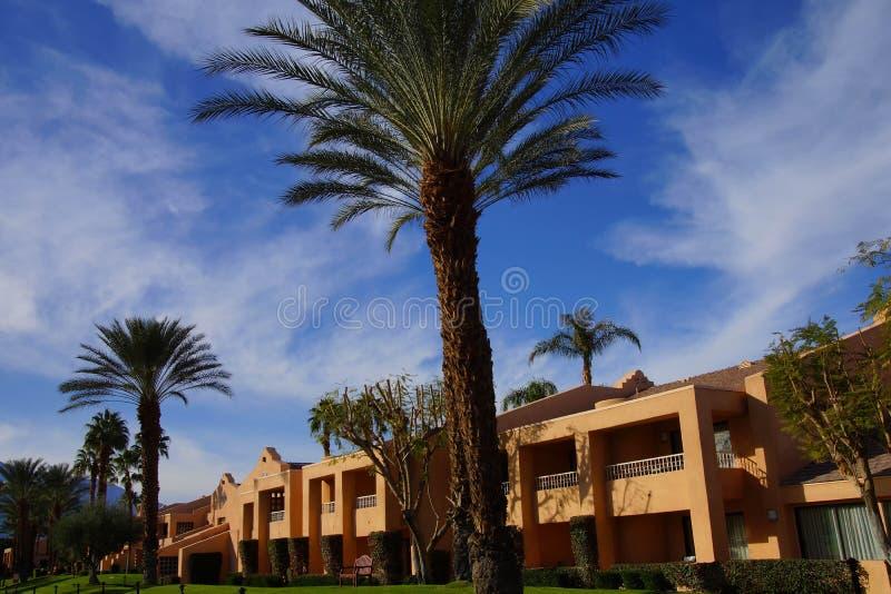 Grön oas med palmträd arkivfoto