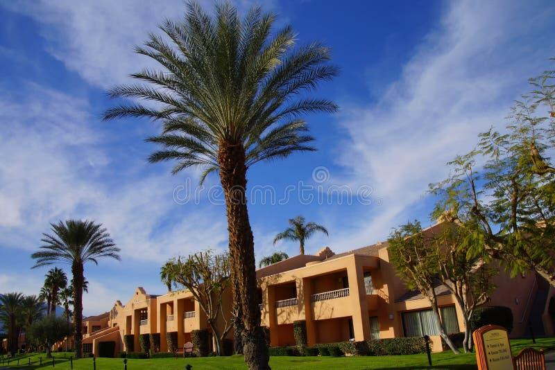 Grön oas med palmträd arkivbild