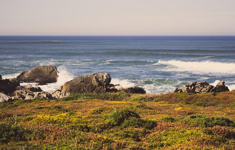 Grön och gul mossa och gräs i stenar på kusten för Atlantic Ocean kustsommar med vaggar och stenar Scenisk seascape arkivfoto