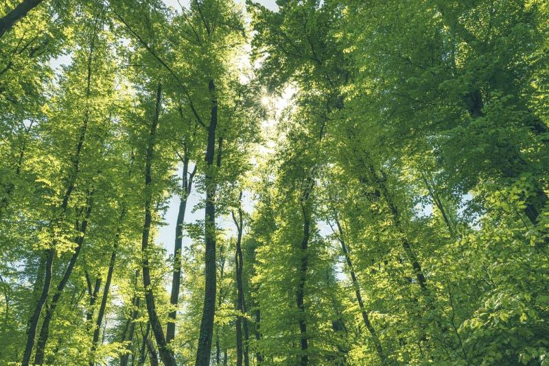 Grön och hälsosam skog är en viktig del av vårt ekosystem royaltyfri fotografi