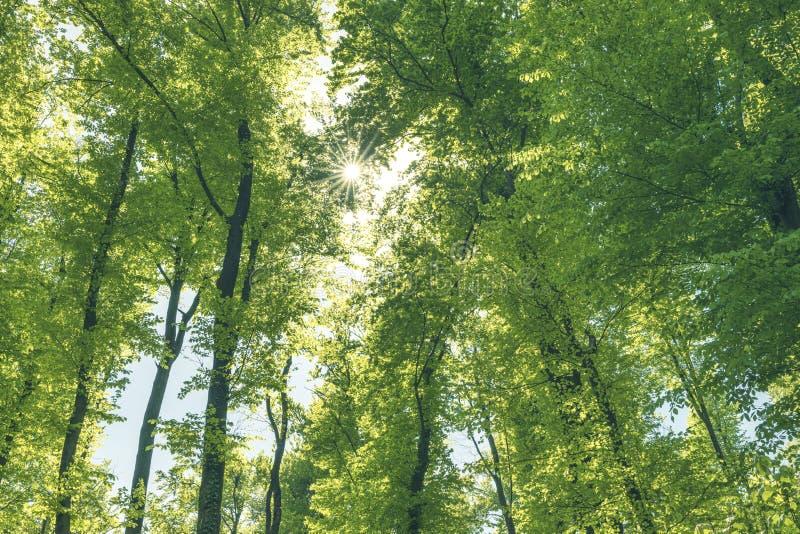 Grön och hälsosam skog är en viktig del av vårt ekosystem fotografering för bildbyråer