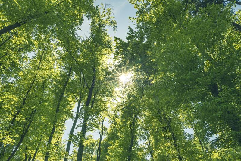 Grön och hälsosam skog är en viktig del av vårt ekosystem royaltyfria bilder