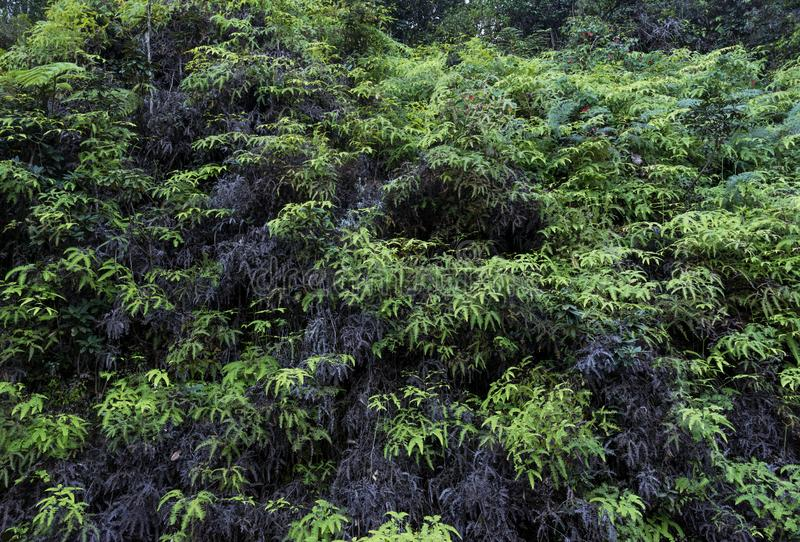 Grön och mörk grå vegetation som växer på kullen fotografering för bildbyråer