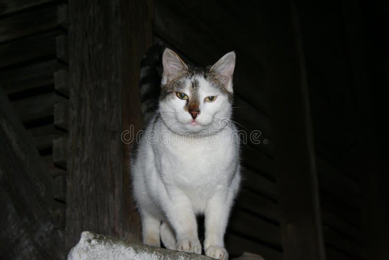 Grön och vit katt royaltyfri foto
