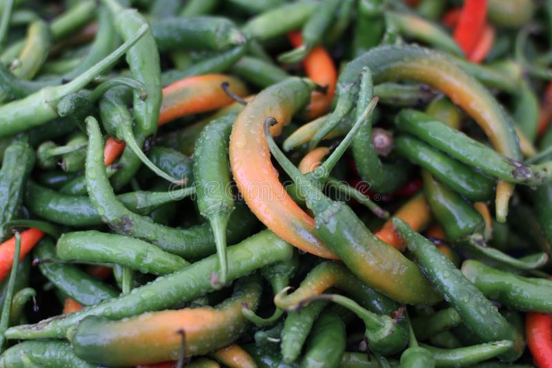 Grön orange peppar för röd chili fotografering för bildbyråer