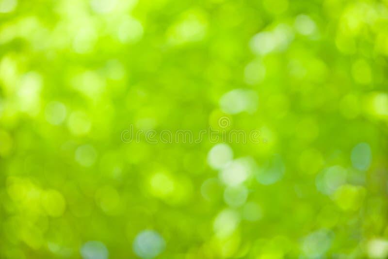 Grön oskarp bokeh lämnar bakgrund Naturmiljö och designbegrepp arkivbild