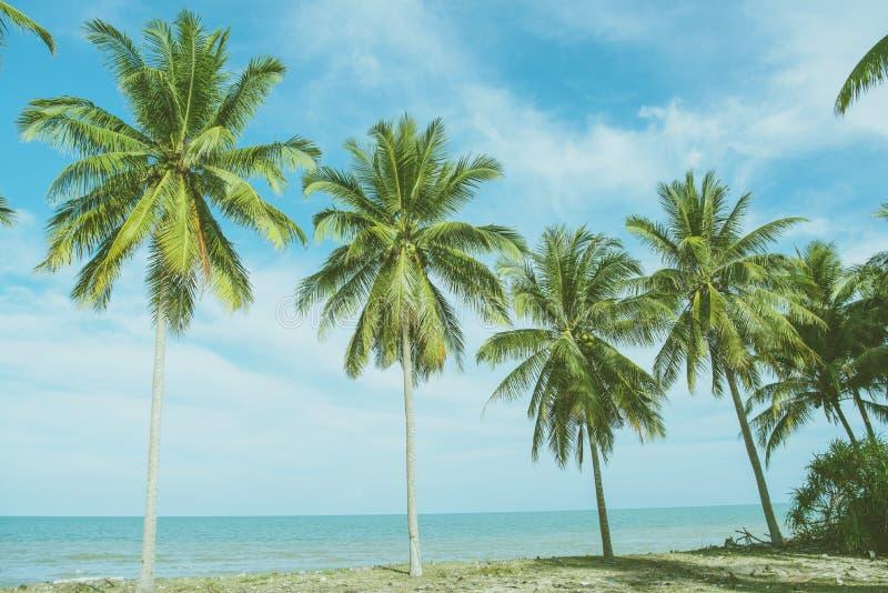 Grön palmblad för natur på den tropiska stranden med solljus Sommar arkivbilder