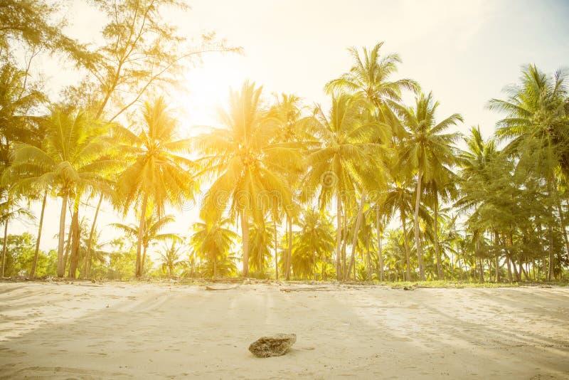 Grön palmblad för natur på den tropiska stranden med solljus Sommar fotografering för bildbyråer