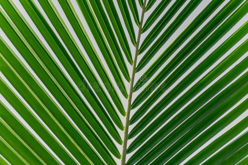 Grön palmbladtexturbakgrund arkivbild