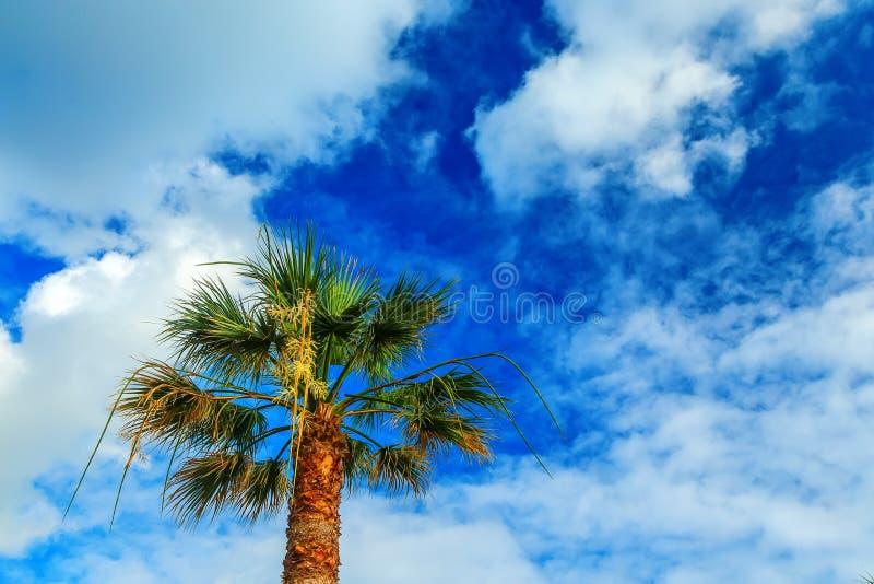 Grön palmträd på blå himmel med molnbakgrund arkivfoto