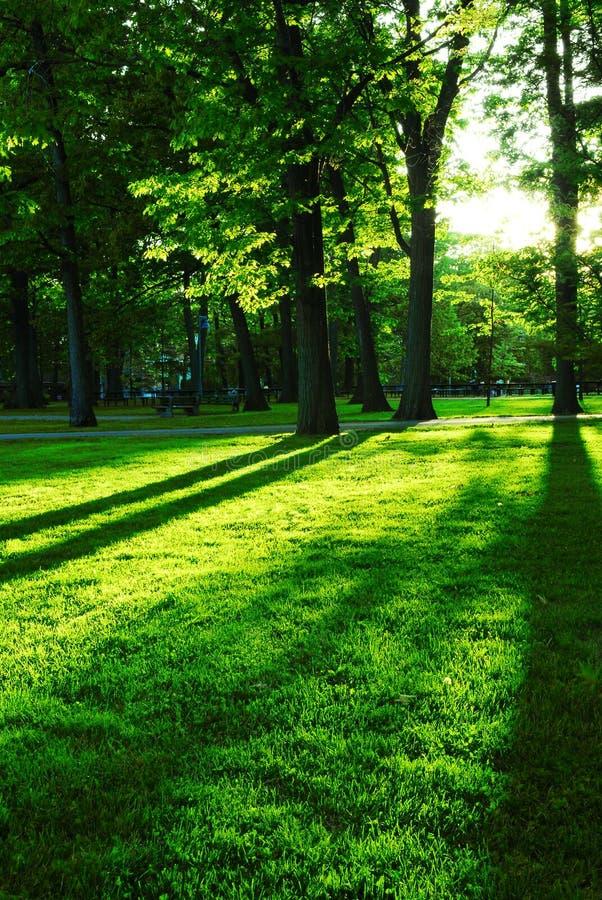 grön park arkivfoton