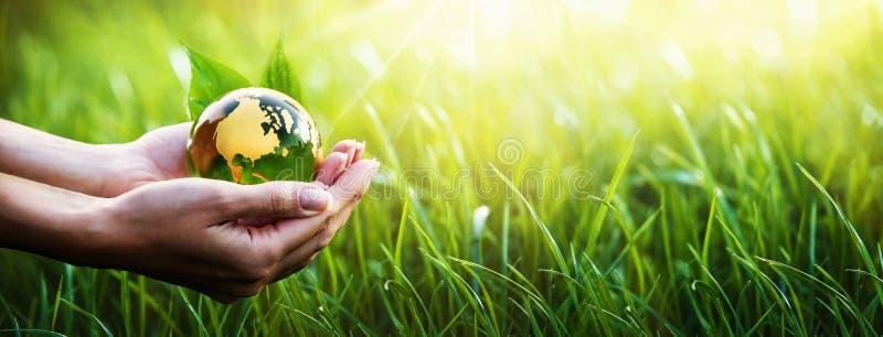 Grön planet i dina händer miljön för bakgrundsomsorgsbegreppet isolerade liten taketreewhite royaltyfri bild