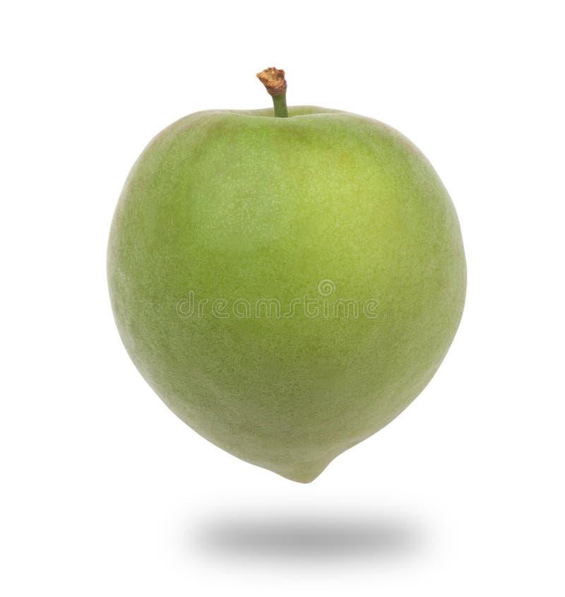 grön plommon royaltyfri bild