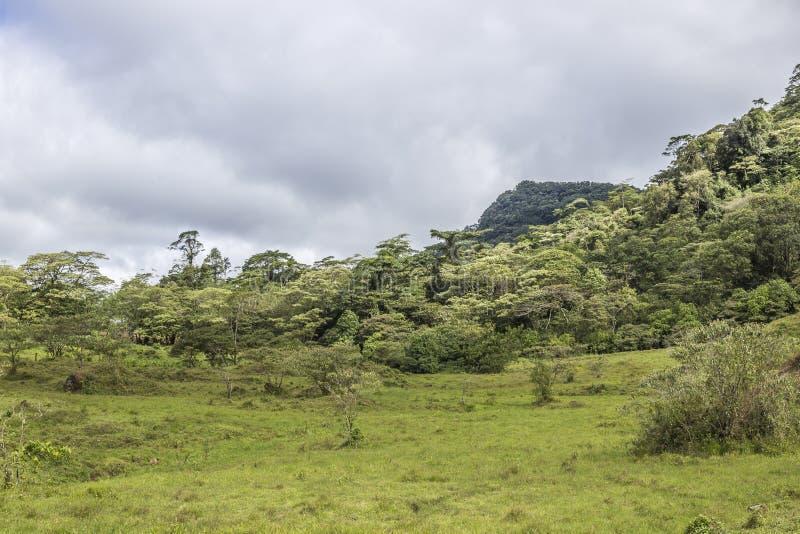 Grön praire på den naturliga reserven för Peñas Blancas massiv, Nicaragua arkivfoton