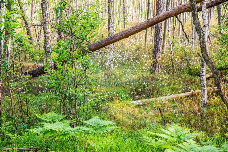 Grön rik skog för träsk fotografering för bildbyråer