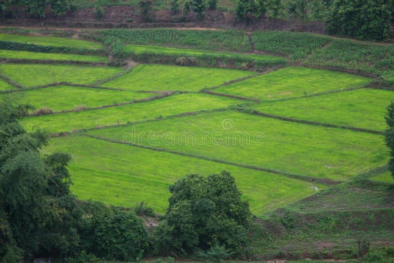 Grön risfält i berg på Phetchabun, Thailand fotografering för bildbyråer