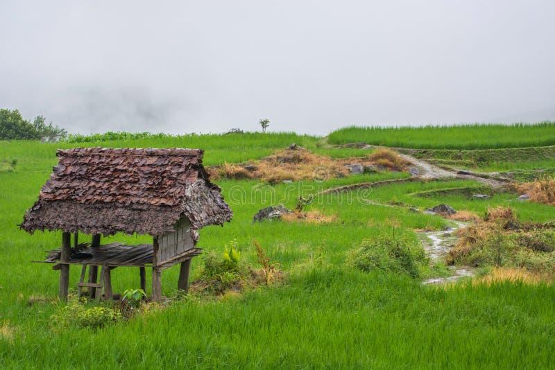 Grön risfält med dimma i Chiang Mai Thailand, risfält på arkivbilder