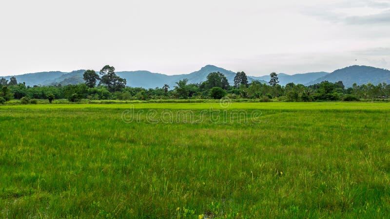 Grön risfält- och bergbakgrund royaltyfri foto
