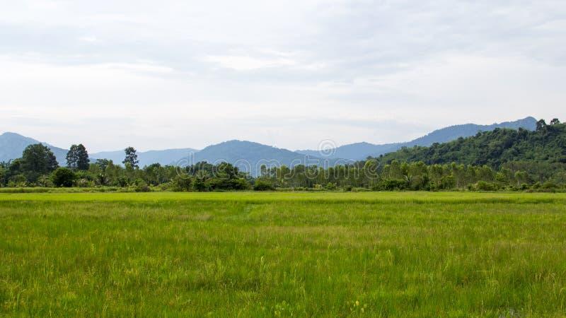 Grön risfält- och bergbakgrund arkivfoton