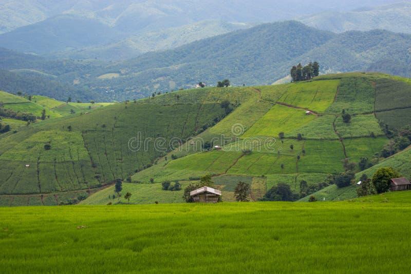 Grön risfält på berget med dimma i Chiang Mai Thailand, Ri royaltyfria bilder